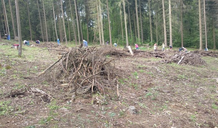 Úklid lesa
